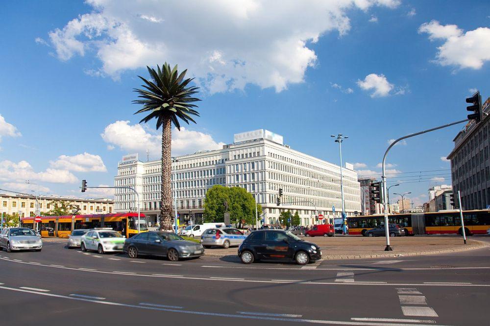 Palma w Warszawie na Nowym Świecie